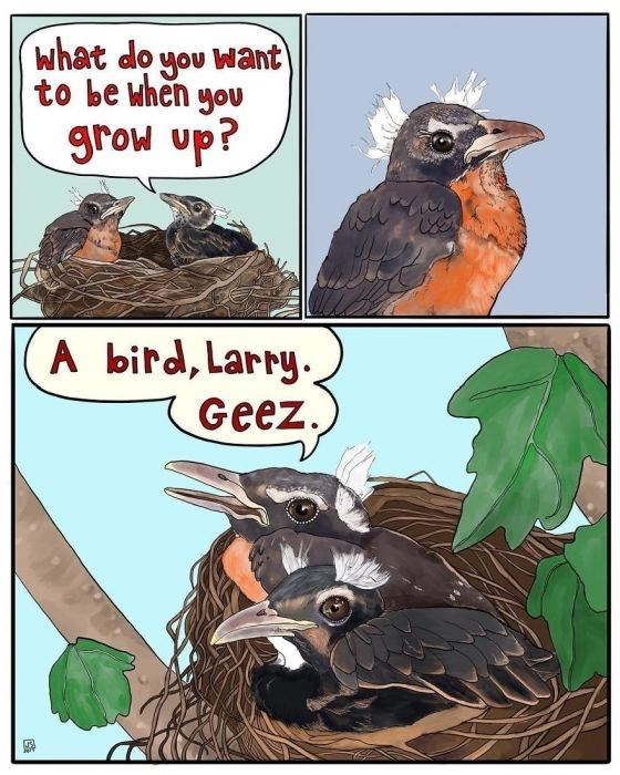 Bird - What do you Want to be when you grow up? A bitd, Larry Geez.