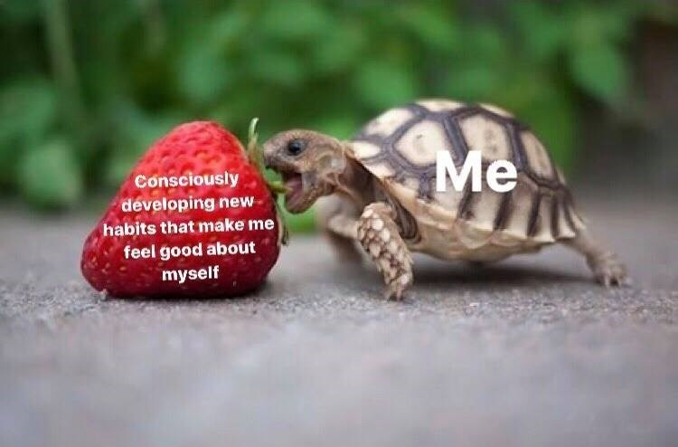 Tortoise - Me Consciously developing new habits that make me feel good about myself