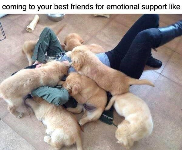 Dog - coming to your best friends for emotional support like