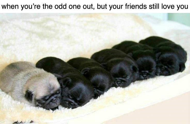 Dog - when you're the odd one out, but your friends still love you