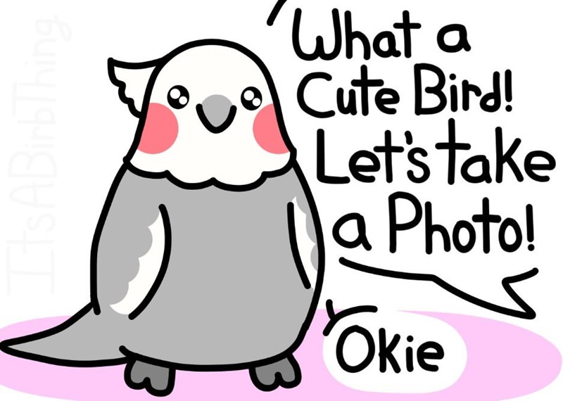 Facial expression - What a Cute Bird! Let's take la Photo! Okie