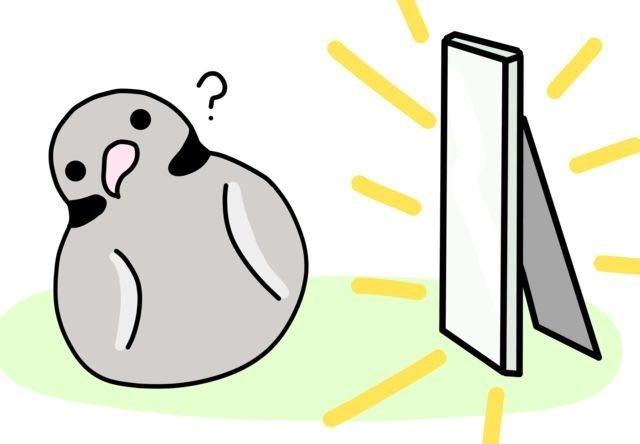 Flightless bird - ? T