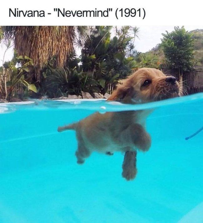 "Dog - Nirvana - ""Nevermind"" (1991)"
