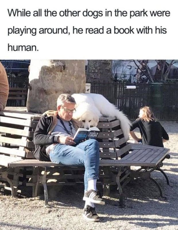 Furniture - While all the other dogs in the park were playing around, he read a book with his human PROP EUROPE