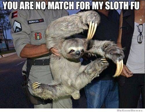 sloth meme of a sloth being held by an officer and drawing up its hands in a defensive position