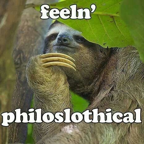 15 Hilarious Sloth Memes To Brighten Your Day - I Can Has Cheezburger?