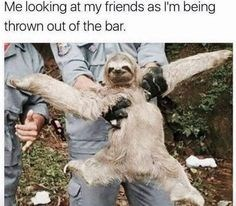 sloth meme of a sloth being held by someone and its arms and legs are flailing