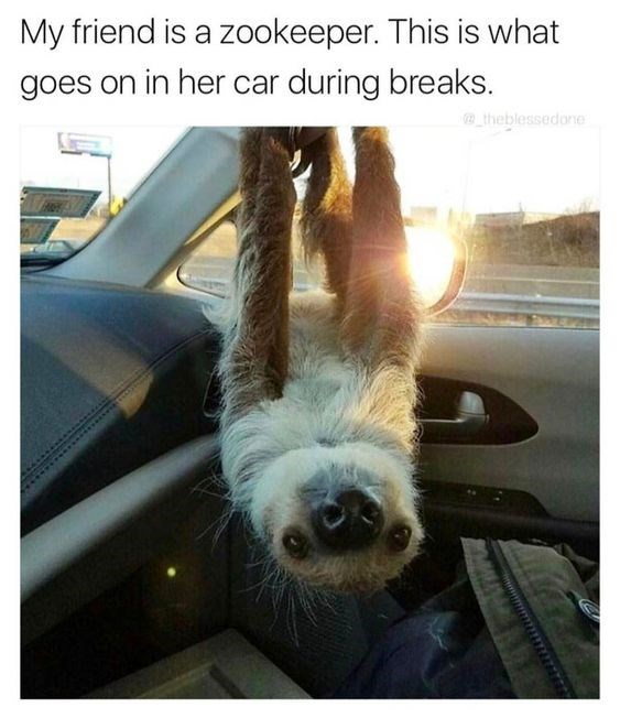 sloth meme of a sloth hanging upside down in a car