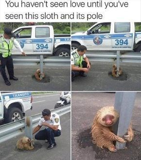 sloth meme hanging a pole and a police officer comes to check on it