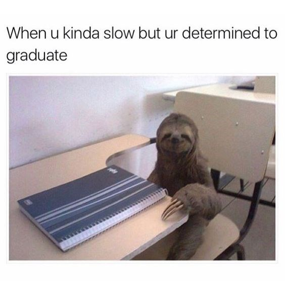 sloth meme about trying your best to graduate if you are slow