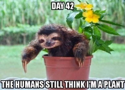 sloth meme of a sloth sitting in a plant on day 42
