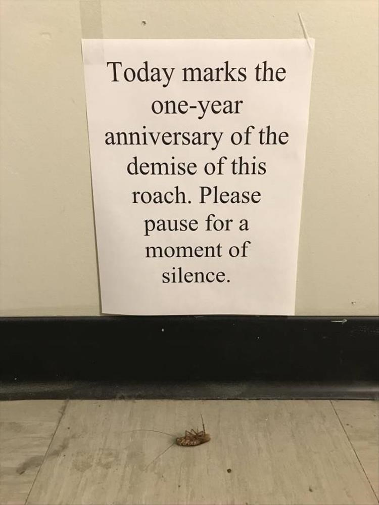 Text - Today marks the one-year anniversary of the demise of this roach. Please pause for a moment of silence.