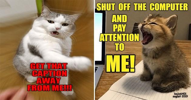 lolcats funny cat memes