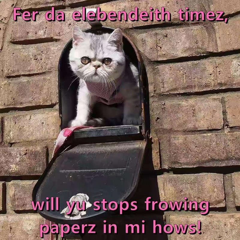 Cat - Fer da elebendeith timez will ystops frowing paperz in mi hows!