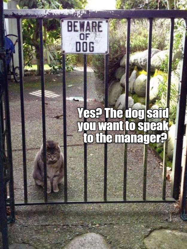 Zoo - BEWARE OF DOG Yes? The dog said you want to speak to the manager?