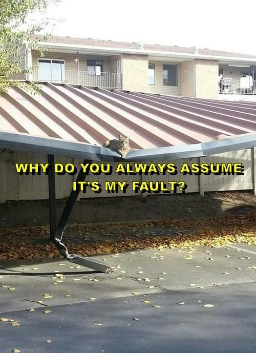 Roof - WHY DO YOU ALWAYS ASSUME IT'S MY FAULT?