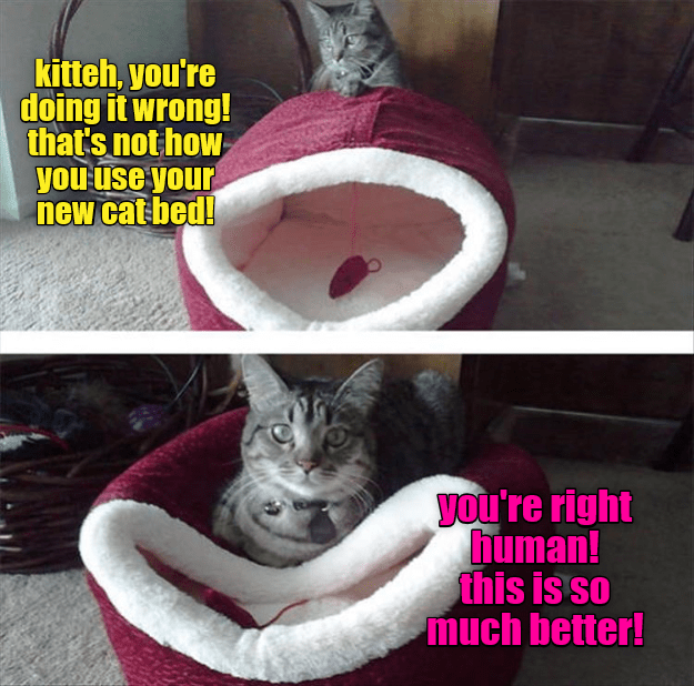 Photo caption - kitteh, you're doing it wrong! that's not how you use your new cat bed! you're right human! this is so much better!