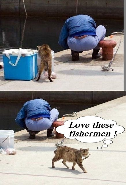 Cat - Love these fishermen