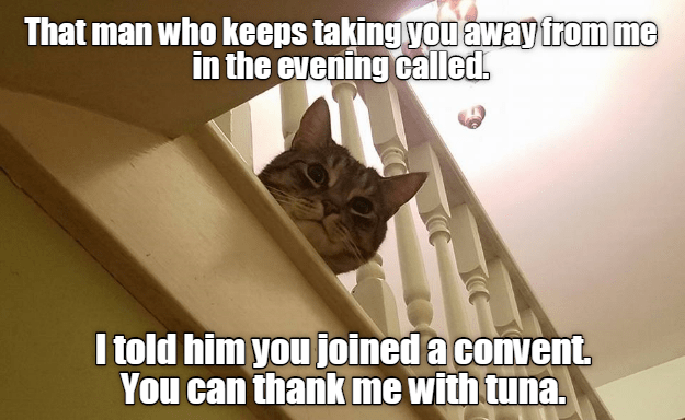 Photo caption - That man who keeps taking you away from me in the evening called. I told him you joined a convent, You can thank me with tuna.