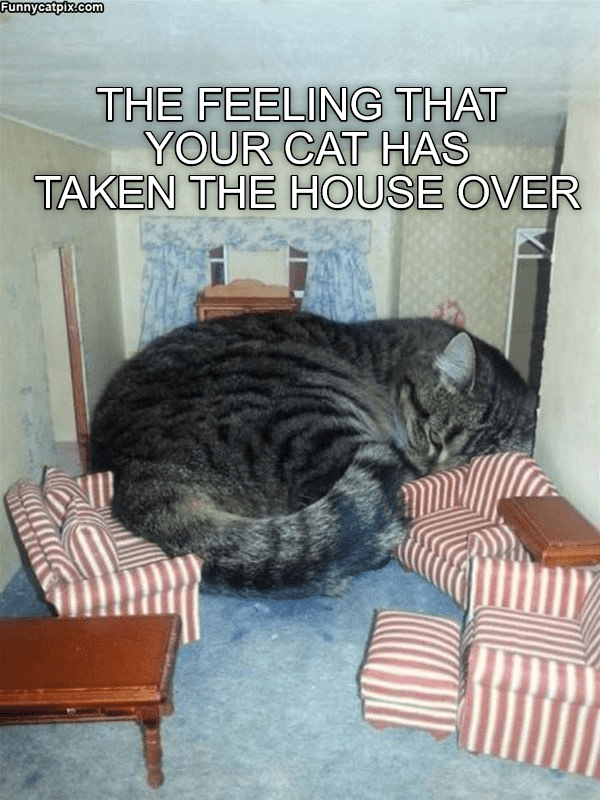 Cat - Funnycatpix.com THE FEELING THAT YOUR CAT HAS TAKEN THE HOUSE OVER
