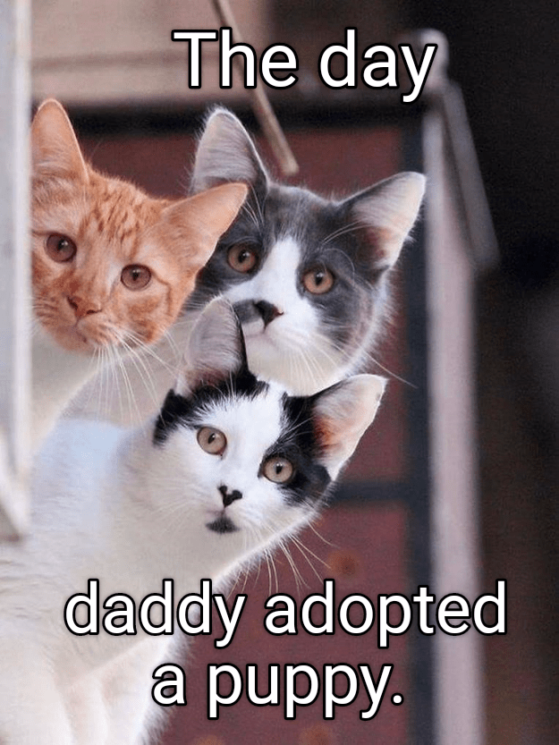 Cat - The day daddy adopted a puppy.
