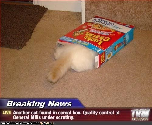 Cat - ANINNLIA Lucky Breaking News LIVE Another cat found in cereal box. Quality control at General Mills under scrutiny. EXCLUSIVE ICANHASCHEE2EURGER COM