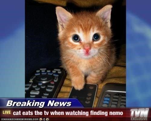 Cat - Breaking News LIVE cat eats the tv when watching finding nemo EXCLUSIVE ICANHASCHEE2EURGER.cOM