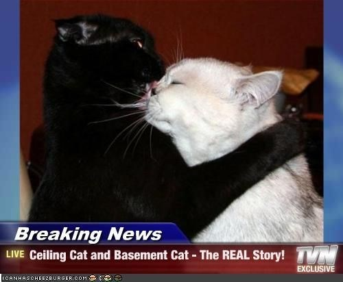 Cat - Breaking News N LIVE Ceiling Cat and Basement Cat The REAL Story! EXCLUSIVE nCANHASCHEE2BURGER COM