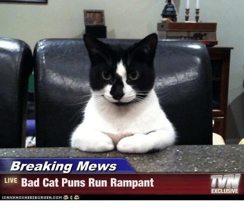 Cat - Breaking Mews LIVE Bad Cat Puns Run Rampant EXCLUSIVE CANHASCHEE2EURGER cOM