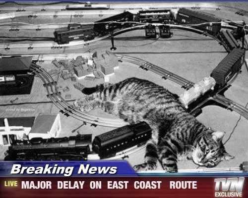 Cat - codel Breaking News TVN LIVE MAJOR DELAY ON EAST COAST ROUTE EXCLUSIVE