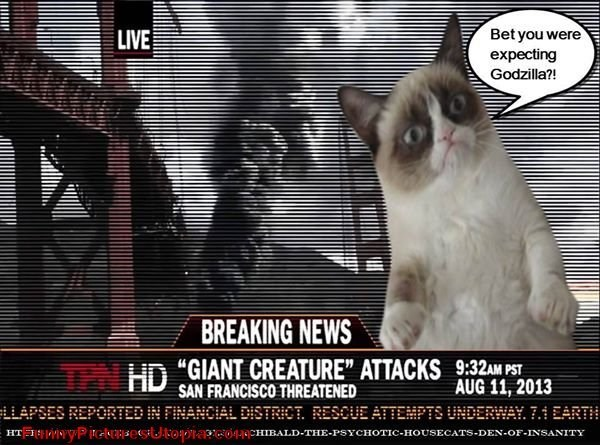 """Cat - Bet you were LIVE expecting Godzilla?! BREAKING NEWS HD """"GIANT CREATURE"""" ATTACKS 9:32AM PST AUG 11, 2013 SAN FRANCISCO THREATENED LLAPSES REPORTED IN FINANCIAL DISTRICT. RESCUE ATTEMPTS UNDERWAY. 7. EARTH HT PtehersesiUtoOtapc044CHImALD-THE-PSYCHOTIC-HOUSECATS-DEN-OF-INSANITY"""
