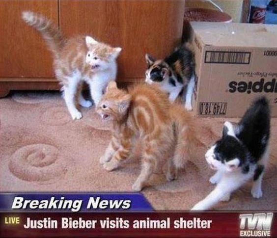 Cat - LO00 ppies 749 18.0 Breaking News TYN LIVE Justin Bieber visits animal shelter EXCLUSIVE