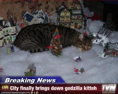Cat - Breaking News LIVE City finally brings down godzilla kitteh EXCLUSIVE ICANHASCHEE2EURGER cOM