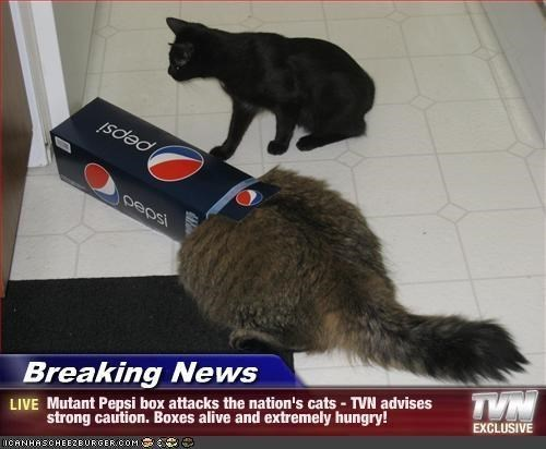 Cat - pepsi Breaking News TVN LIVE Mutant Pepsi box attacks the nation's cats- TVN advises strong caution. Boxes alive and extremely hungry! EXCLUSIVE CANHASCHEE2EURGER coM
