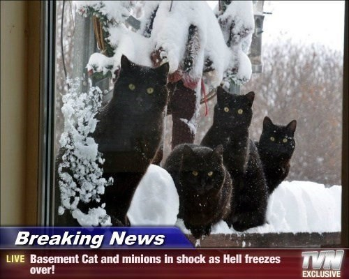 Cat - Breaking News TVN LIVE Basement Cat and minions in shock as Hell freezes over! EXCLUSIVE