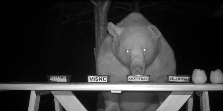 bears honey taste testing