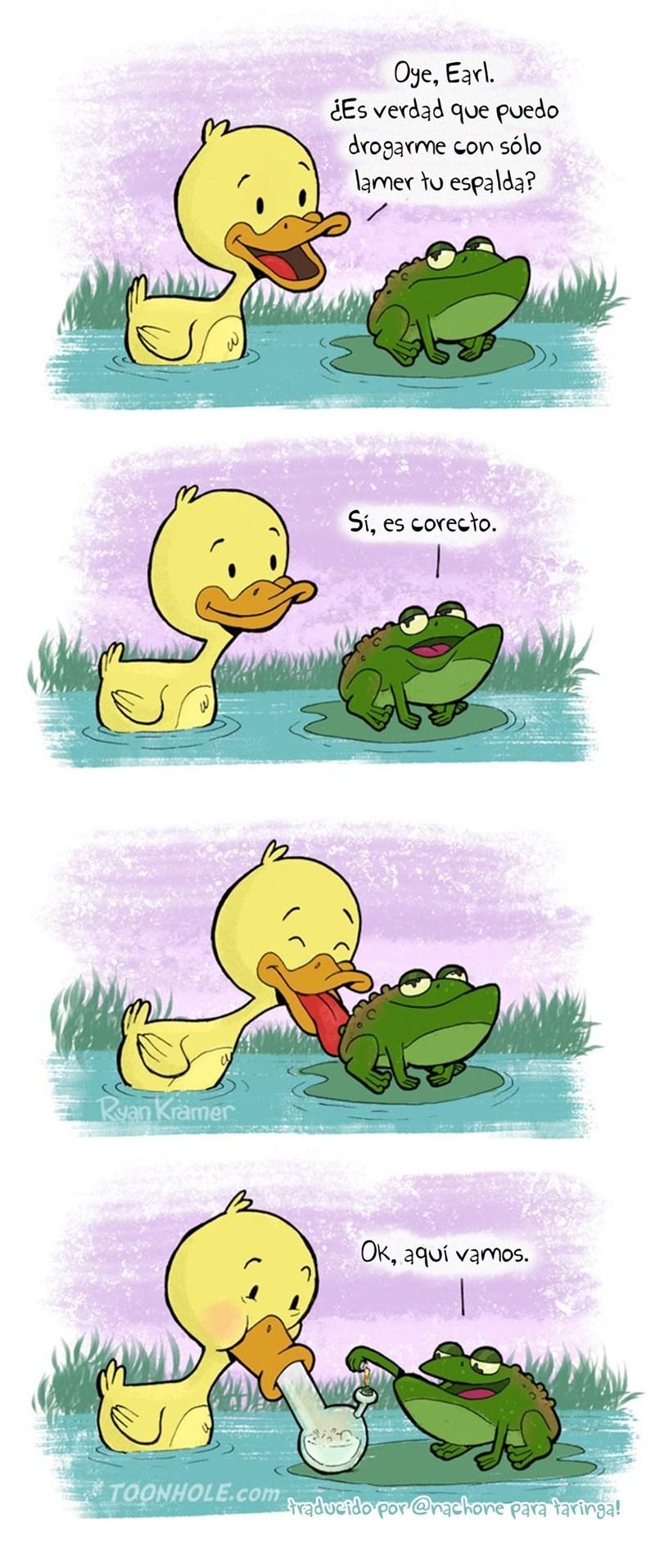 cuando un pato le pregunta a un sapo si se droga