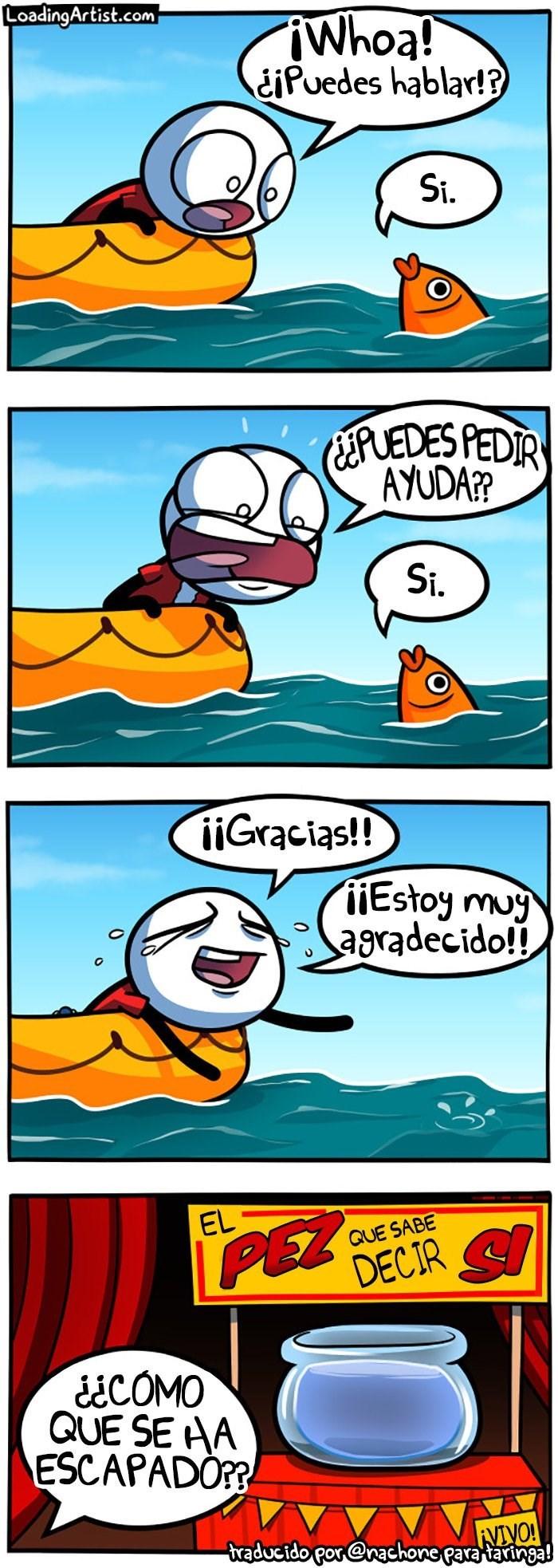 cuando te encuentras a un pez que sabe decir si