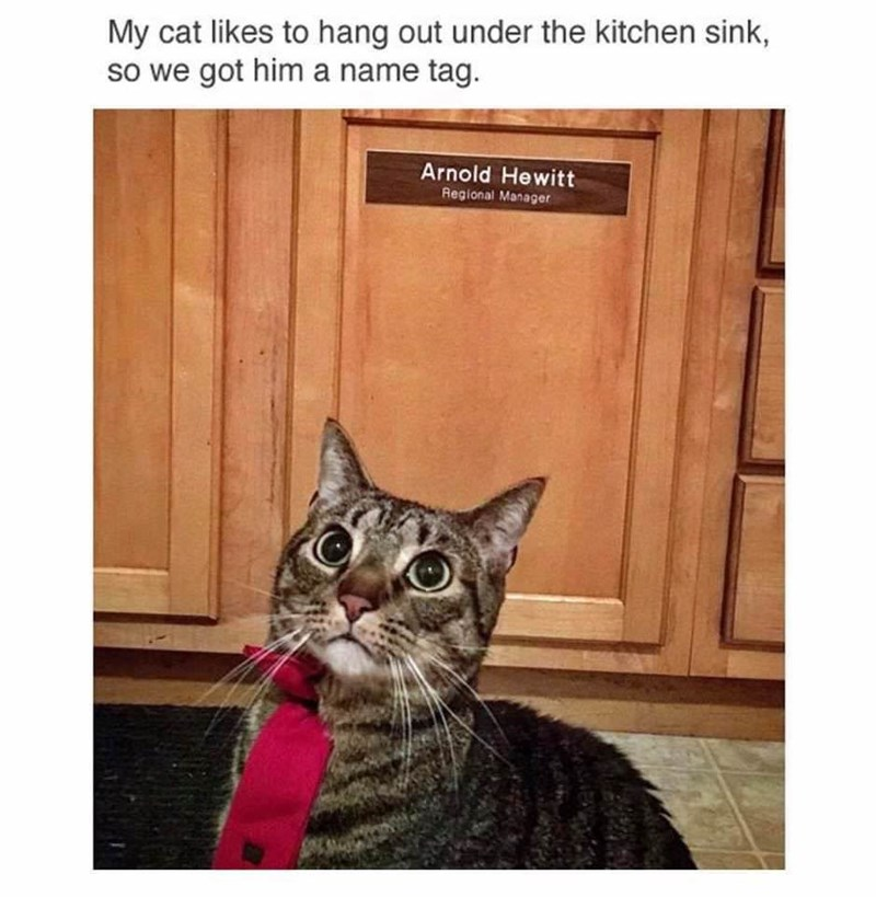 happy meme about tie wearing cat with a position in maintenance