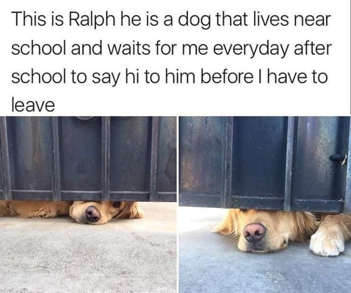 happy meme with pictures of dog peeking under fence waiting for pets