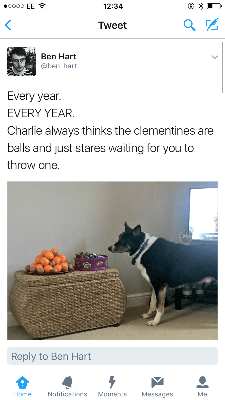 happy meme about dog who thinks fruits are balls