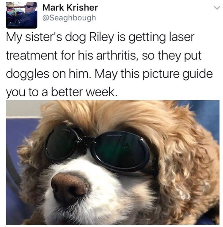 happy meme with picture of dog wearing goggles