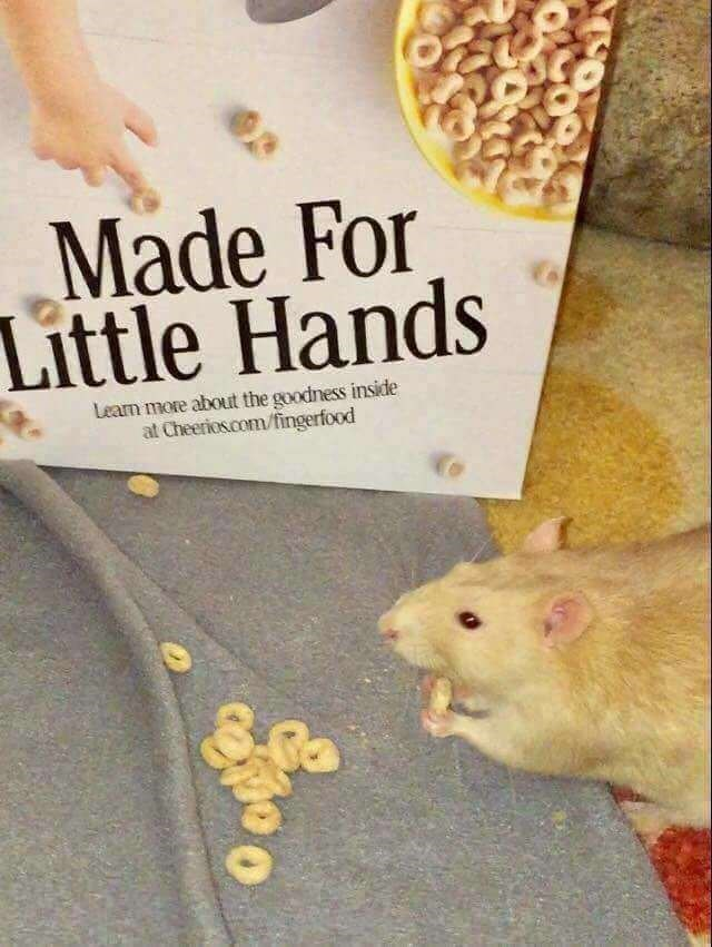 happy meme about cereal made for pet rodents