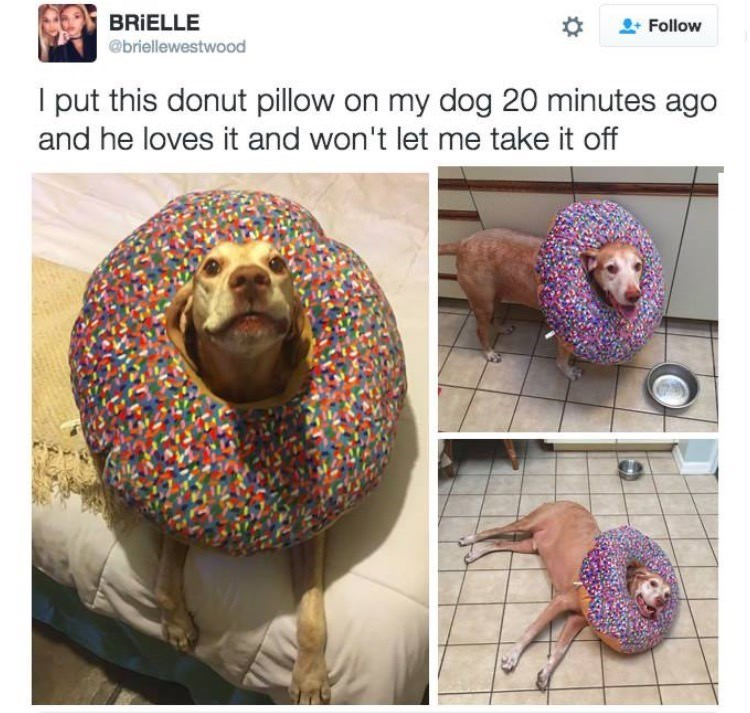 happy meme with pictures of dog wearing donut pillow around its head
