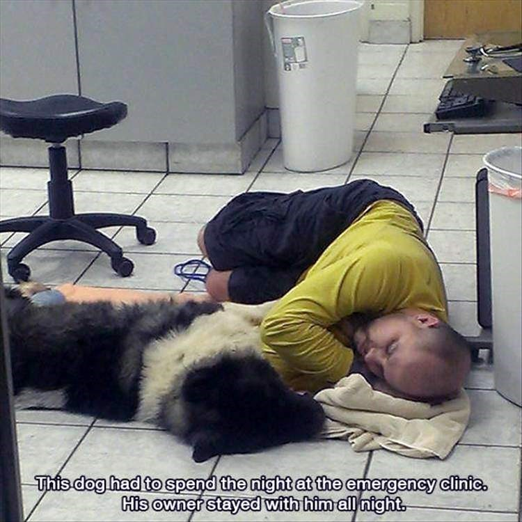 happy meme about love between dog and his human