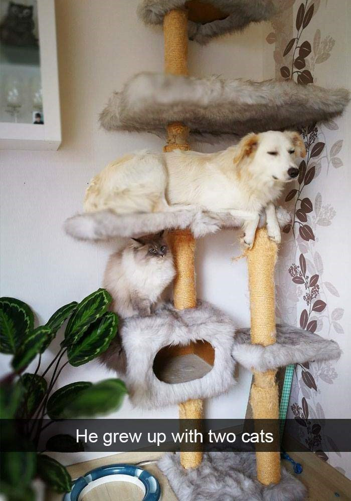 happy meme with snapchat picture of dog sitting in a cat tree