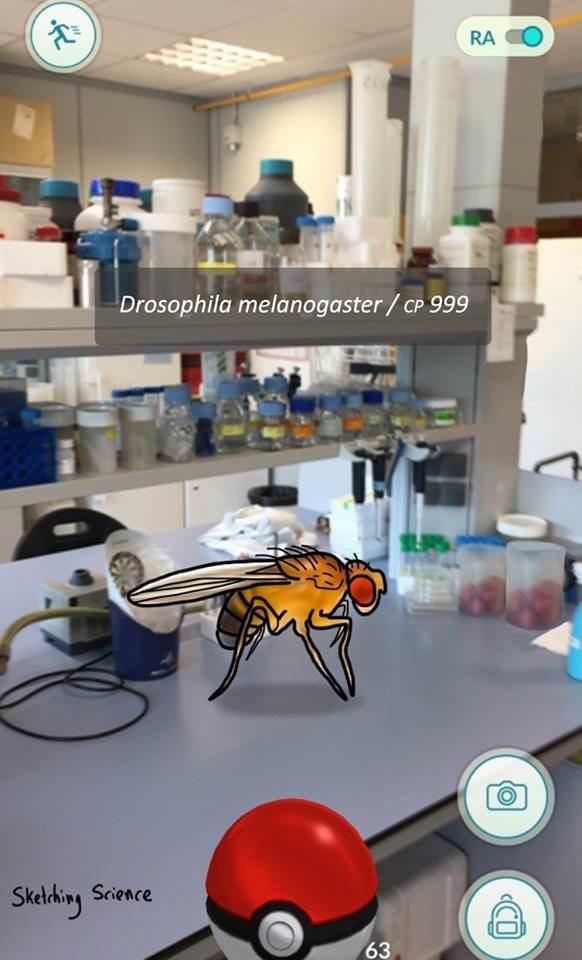 Electronics - RA Drosophila melanogaster/cP 999 Stelbing Science 63
