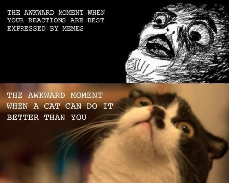 Cat - THE AWKWARD MOMENT WHEN YOUR REACTIONS ARE BEST EXPRESSED BY MEMES THE AWKWARD MOMENT WHEN A CAT CAN DO IT BETTER THAN YOU