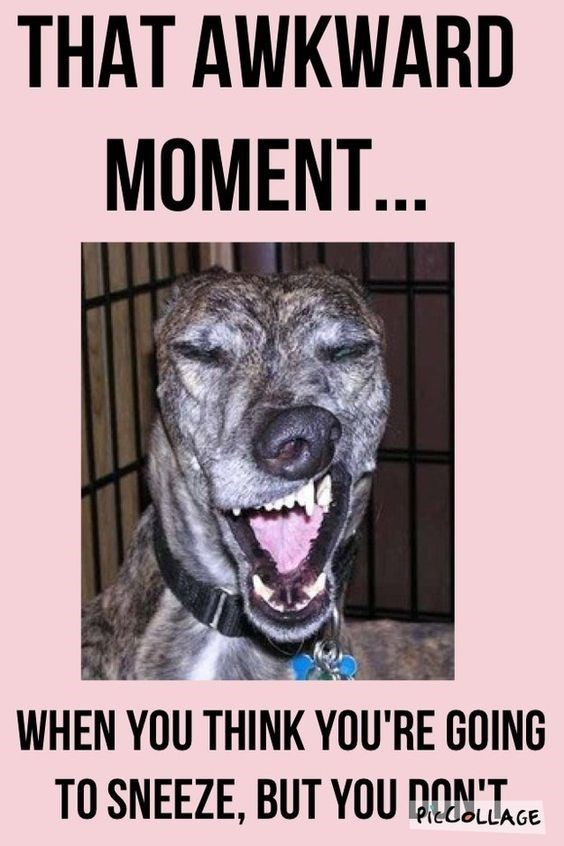 Canidae - THAT AWKWARD MOMENT... WHEN YOU THINK YOU'RE GOING TO SNEEZE, BUT YOU DONT. PieCoLLAGE
