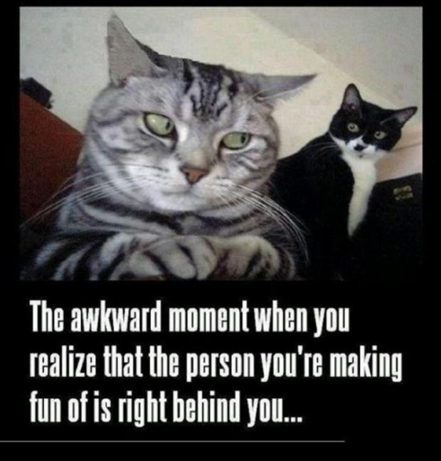 Cat - The awkward moment when you realize that the person you're making fun of is right behind you..